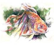 fish-0006-TG