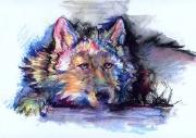 wolf-0022-TG