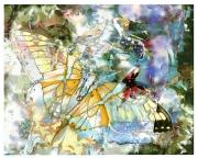 butterfly-0005-TG